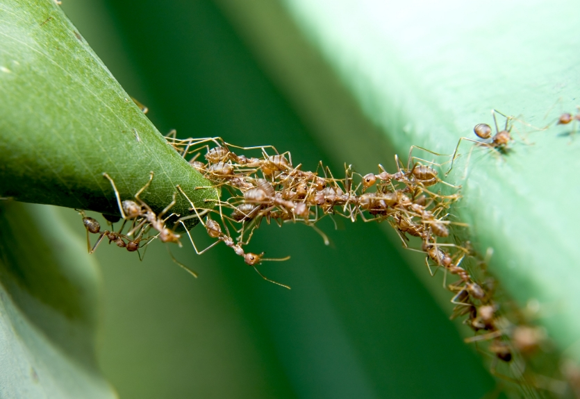 Working ants - photo#8