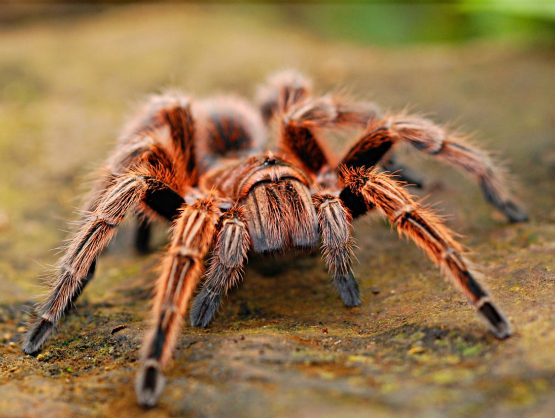 spider, tarantula, creepy